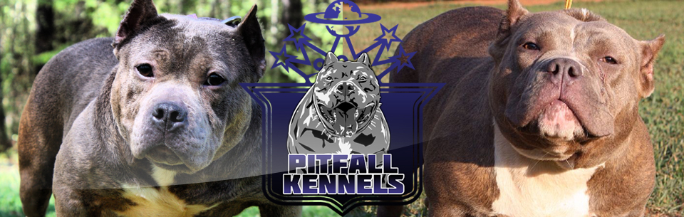 Pitfall Kennels | The World Famous Pitfall Kennels - Atlanta, GA